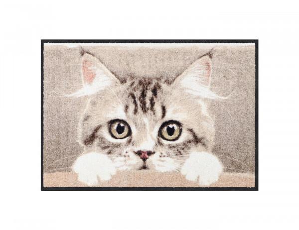 Salonloewe Fußmatte, Nosy cat, Bildmotiv, neugieriges Katzengesicht, 50x75 cm