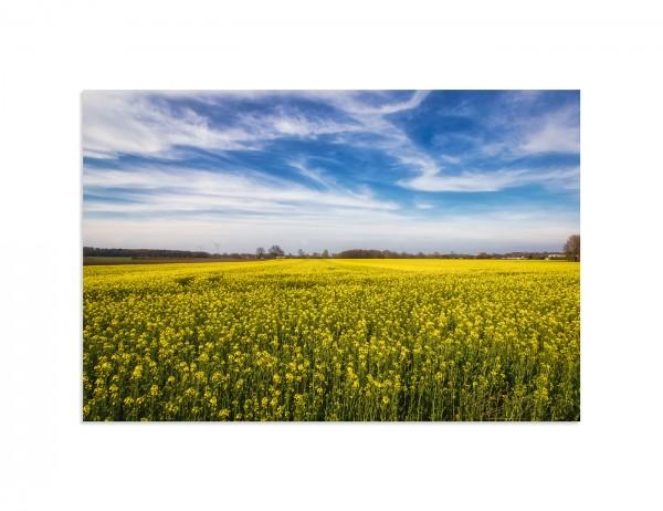 Bild auf Leinwand, Visselhövede, Frühling, Rapsfeld, 60x40 cm