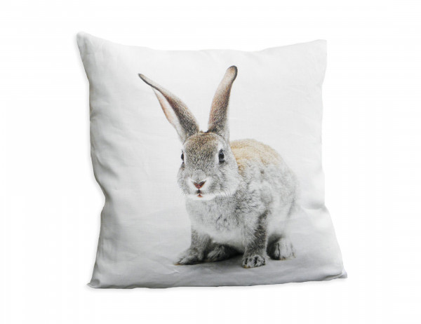Sander Wendekissen One Rabbit